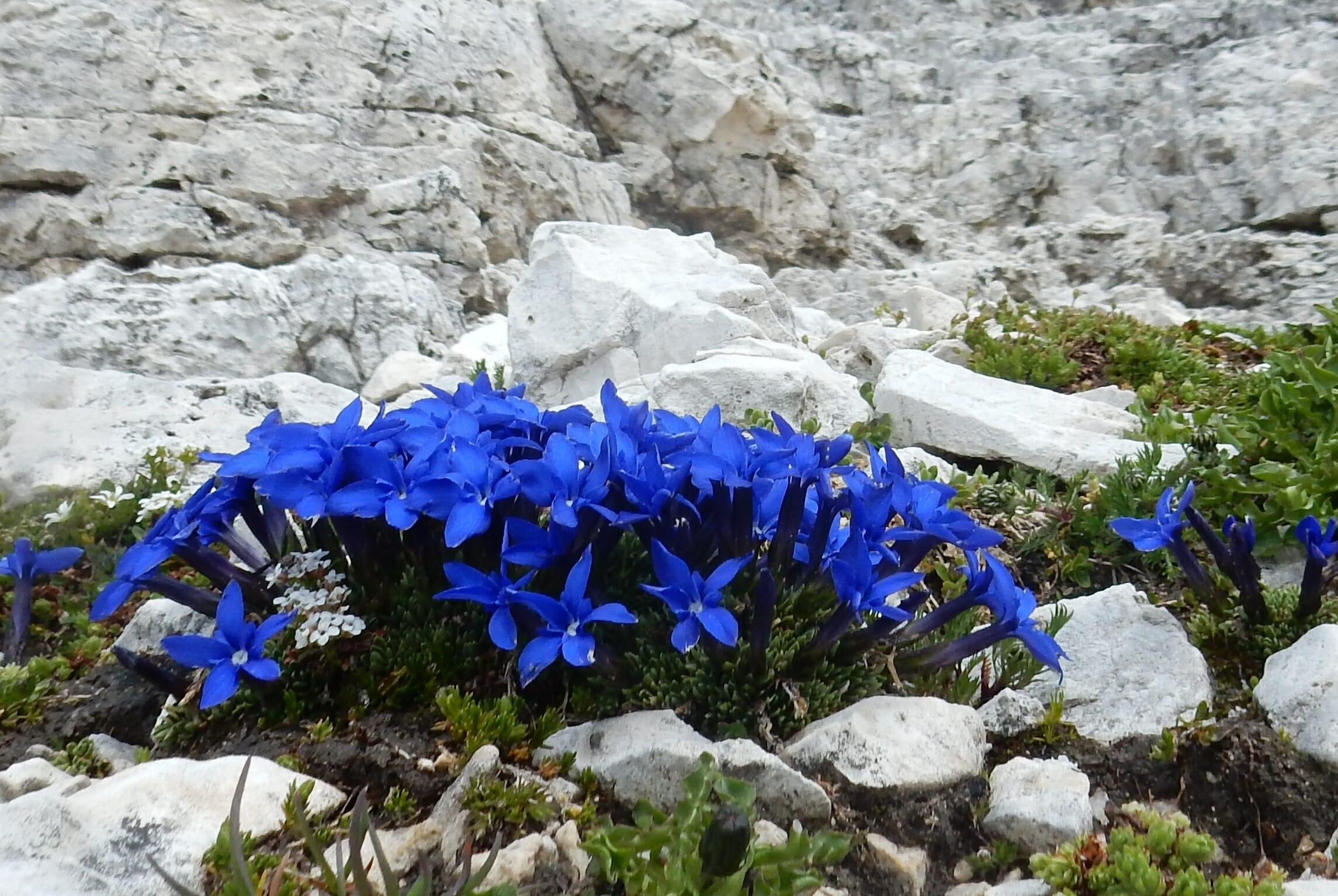Una montagna di fiori