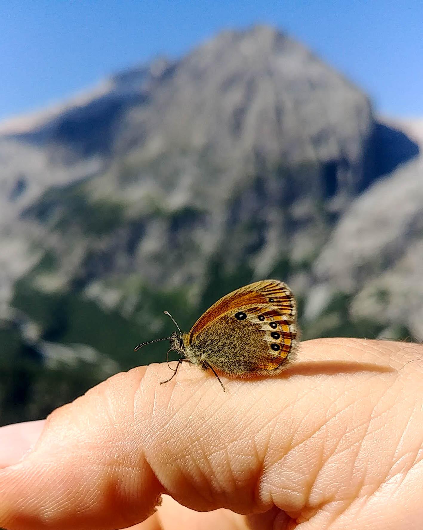 Il peso della farfalla